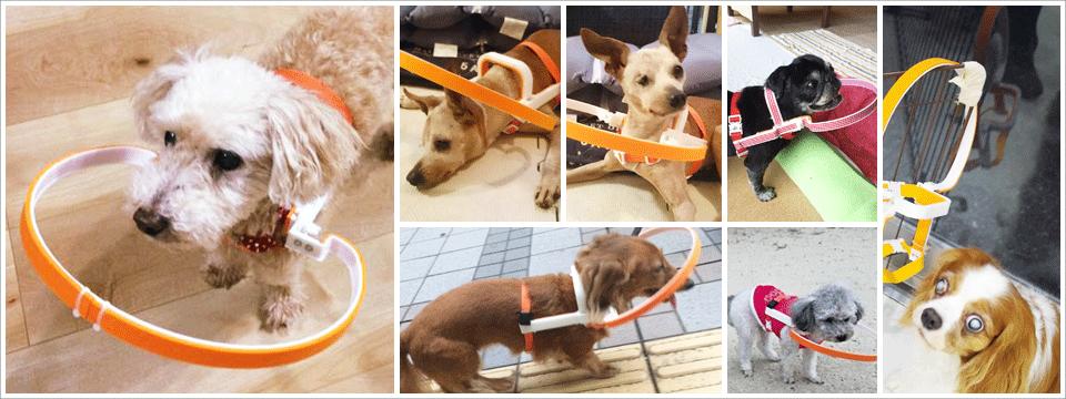 視力を失った犬のための装着具ドッグバンパー