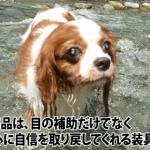 犬の心に自信を取り戻してくれる装具です。 byウィニーちゃん