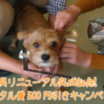 期間限定!採寸具がリニューアル完成記念!レンタル費500円引き