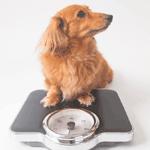 愛犬の体重管理アイキャッチ画像