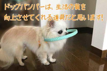 ドッグバンパーは、生活の質を向上させてくれる道具だと思います。by小太郎ちゃん