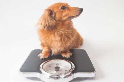 体形を維持するための体重管理