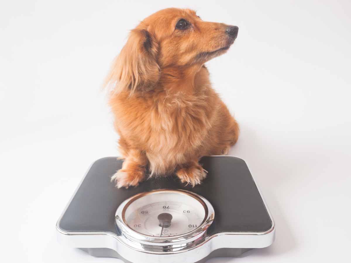 体形を維持するための体重管理ヘッダー画像