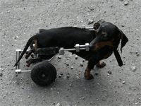 愛犬と楽しく!トレーニングについて