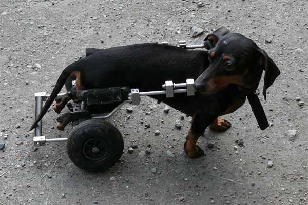 愛犬と楽しく!ドッグバンパー・トレーニングについてイメージ画像