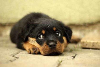目の見えない犬用グッズの採寸予約についてお願い!