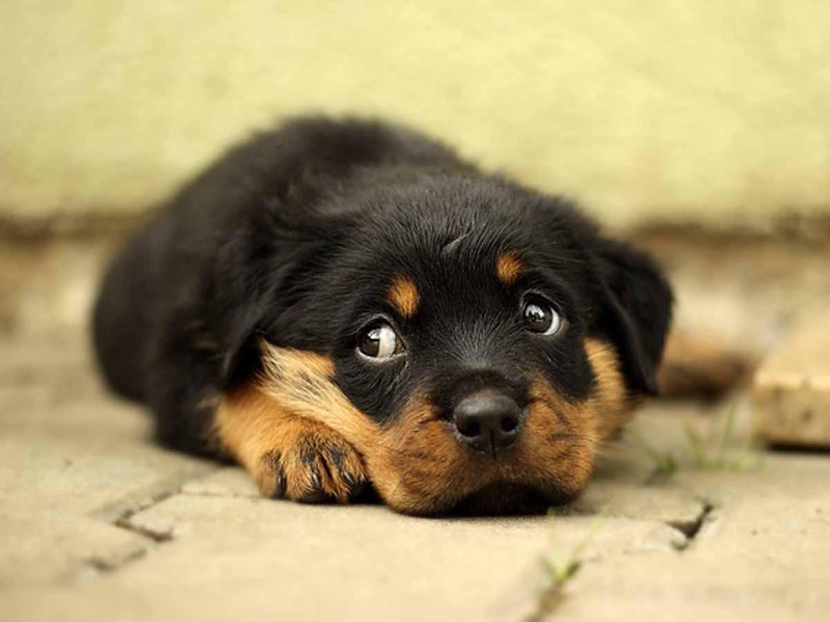 目の見えない犬用グッズの採寸予約についてお願いヘッダー画像