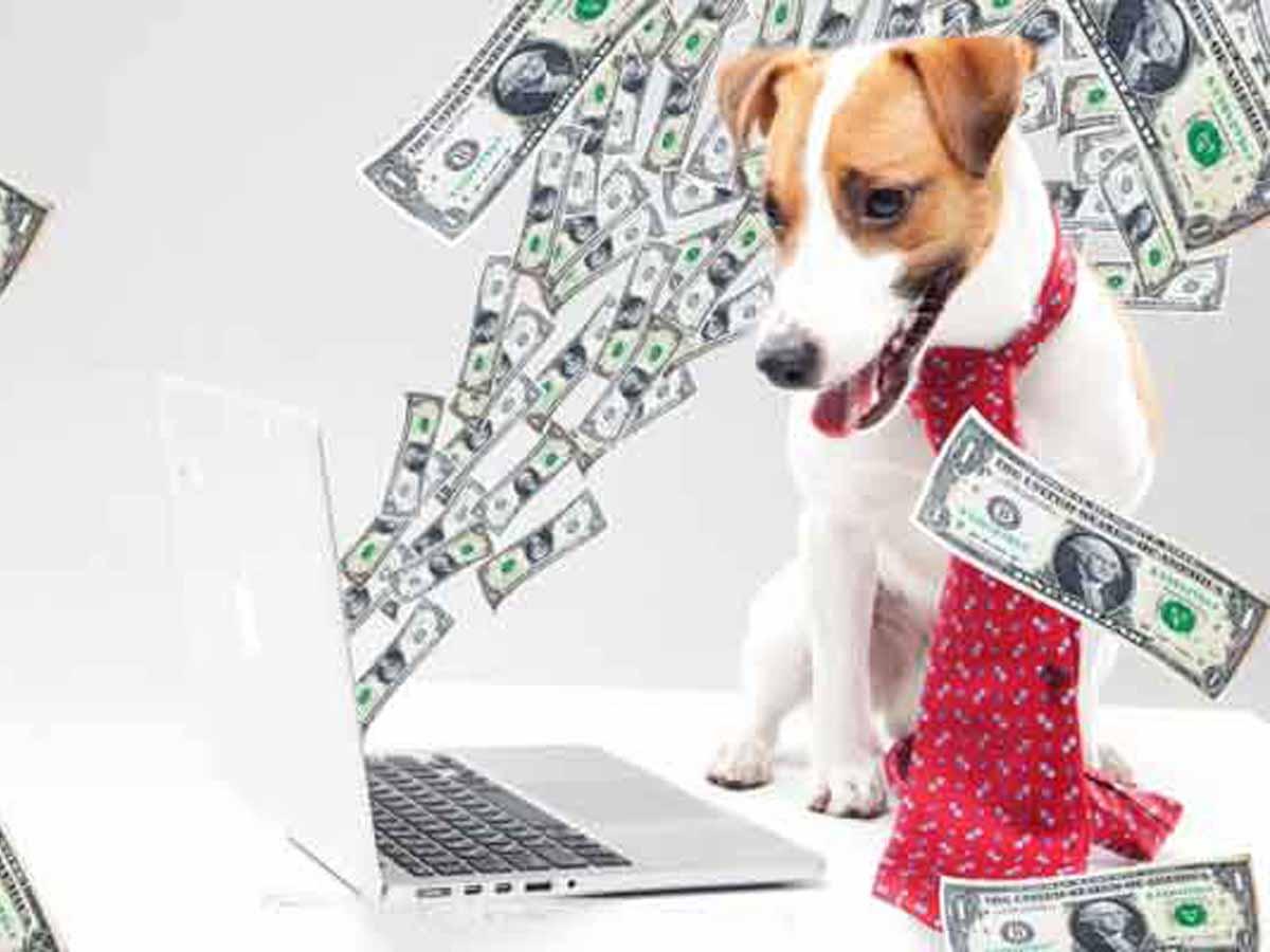 全盲犬グッズ-駆込購入不要!増税後の価格についてヘッダー画像