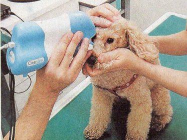 犬の眼科診察をAIで助けるネットサービス「ファンダスアイ」はじまる!