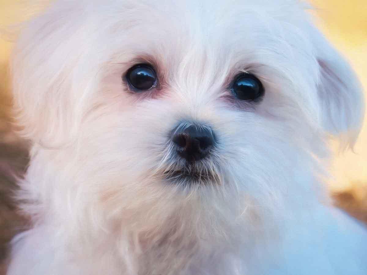犬が視力を失うということ(行動の変化)イメージ画像
