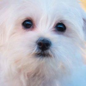犬が視力を失うということ(行動の変化)