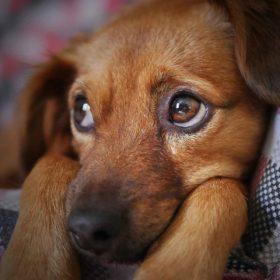犬の疾患のなかでも眼の病気は多く1割がかかると言われています!