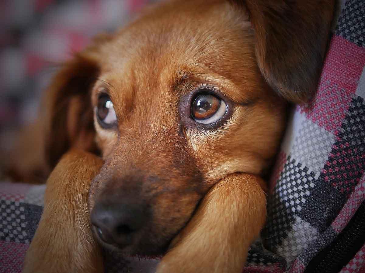犬の1割が眼の病気にかかると言われています!イメージ画像