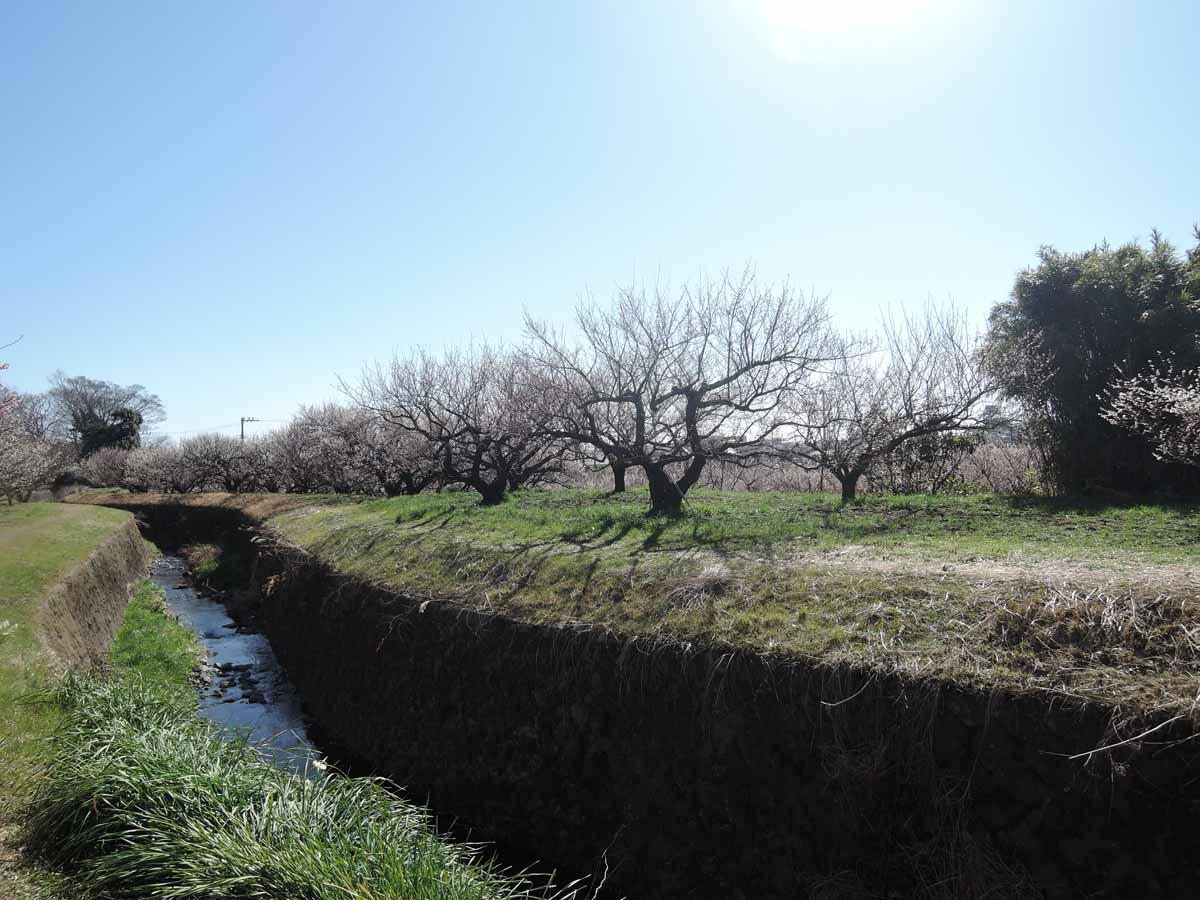 梅林を流れる川の両岸