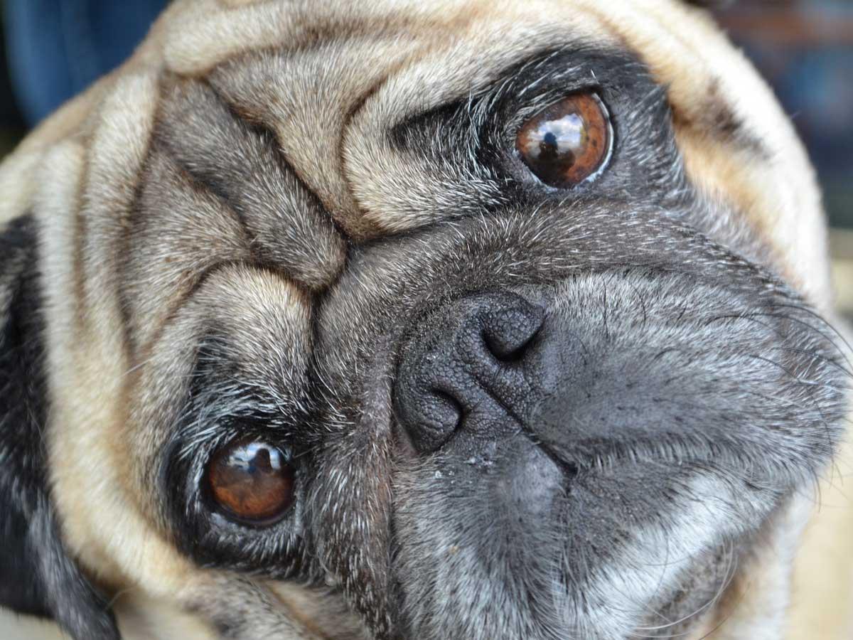視力を失った犬との暮らしで飼い主が意識的にしている行動イメージ画像
