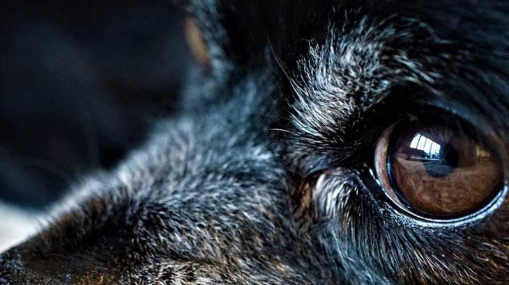 愛犬の目が見えなくなった時の3つの助言