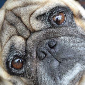 犬が視力を失うということ(飼い主さまが意識的に行っていること)