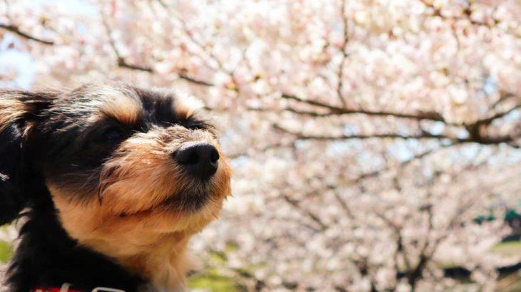 春のお散歩バッグ、プレゼントキャンペーン!