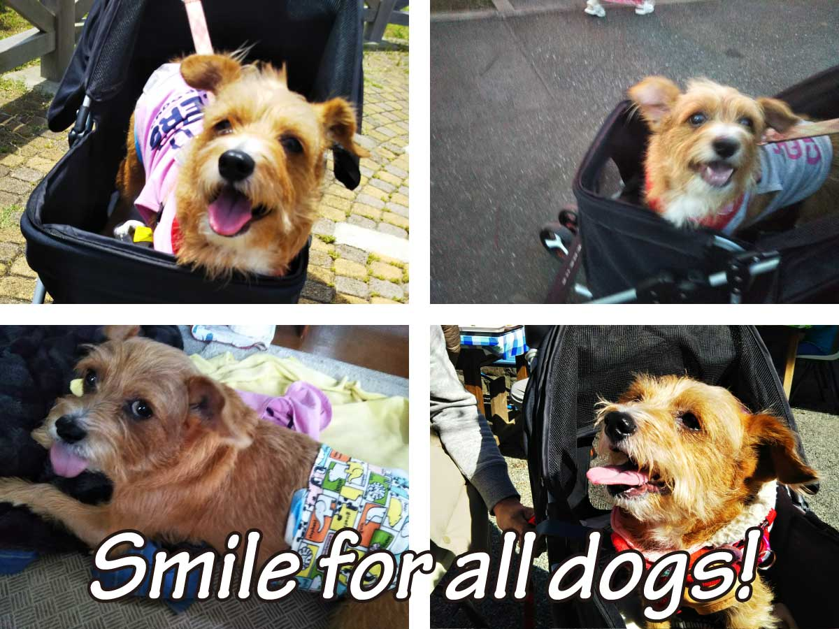 私たちは犬の笑顔が大好きです!イメージ画像