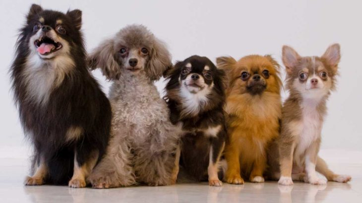 かかりやすい犬種別、目が見えなくなる病気について
