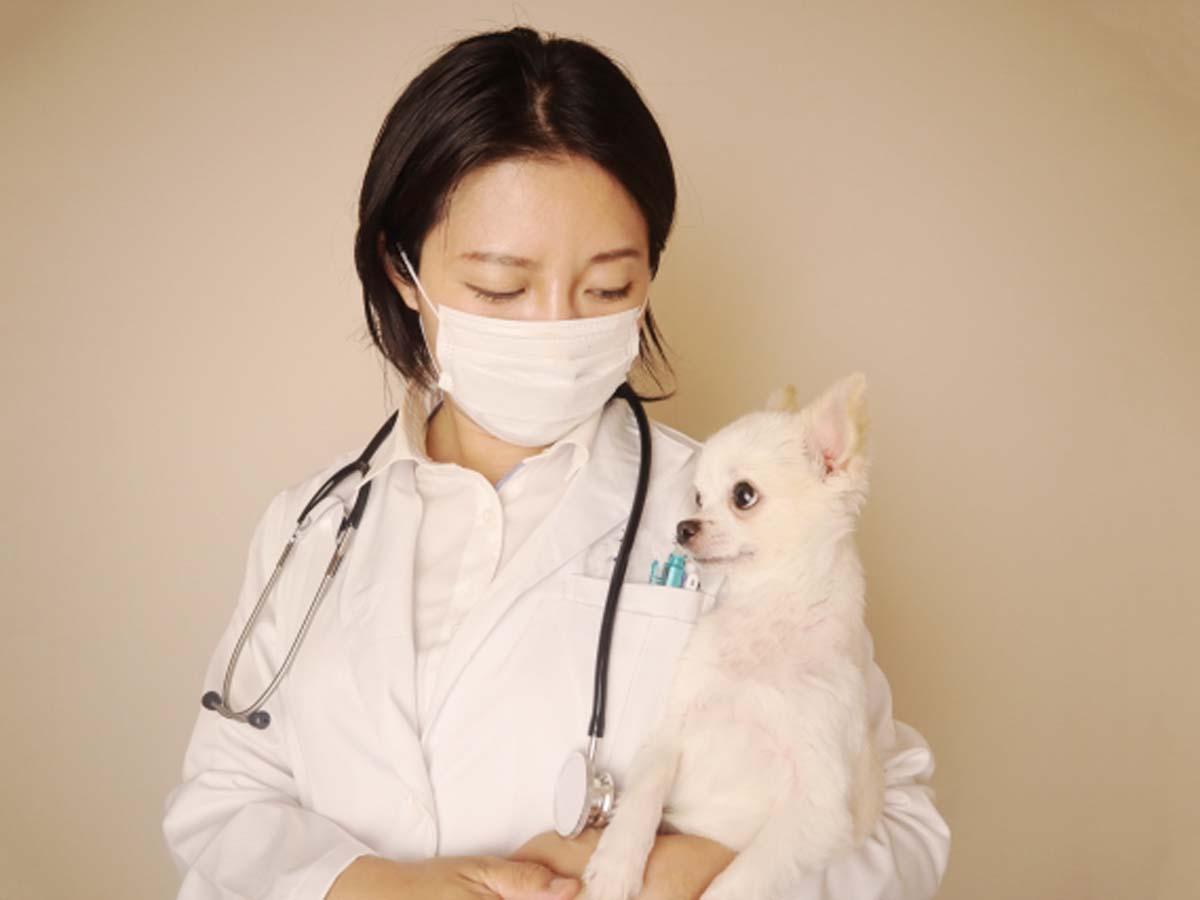 動物病院イメージ画像