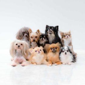 保護犬の笑顔のために!-ドッグバンパー 月1個無償提供します。