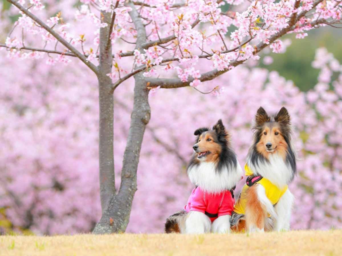 春と犬イメージ画像