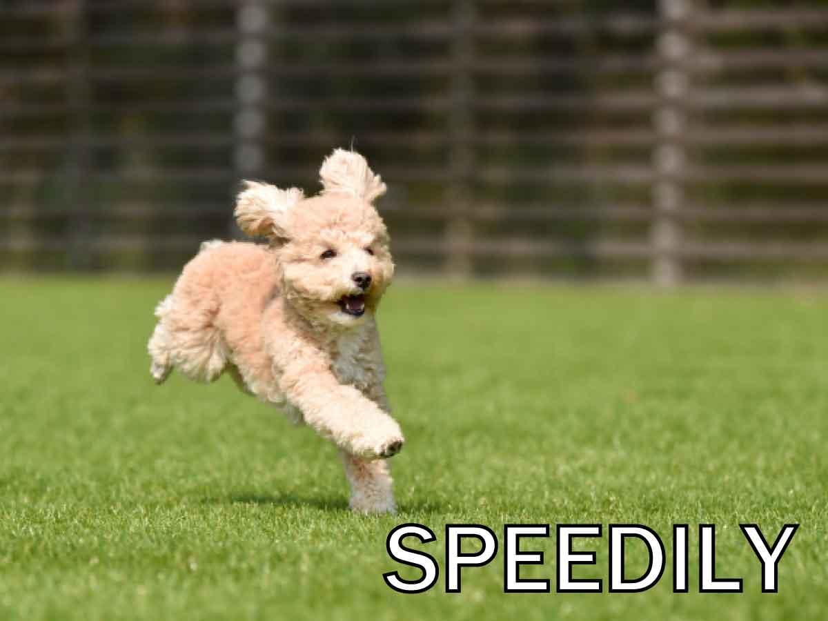 スピード感をもってイメージ画像
