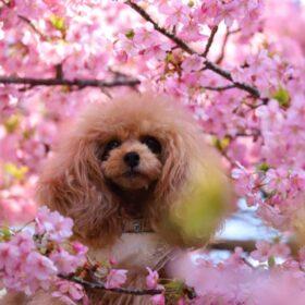春のお散歩バッグプレゼントキャンペーン!