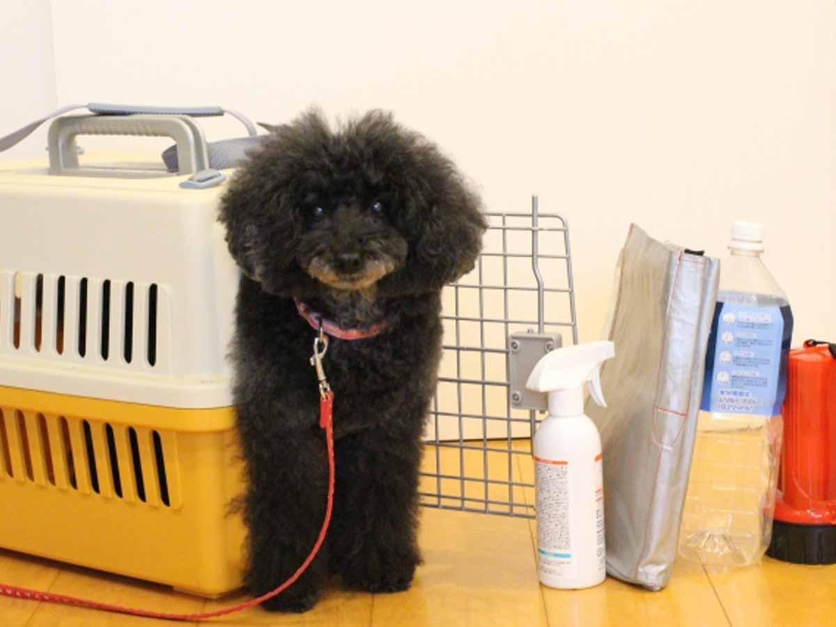 愛犬へそと同行避難訓練!?イメージ画像