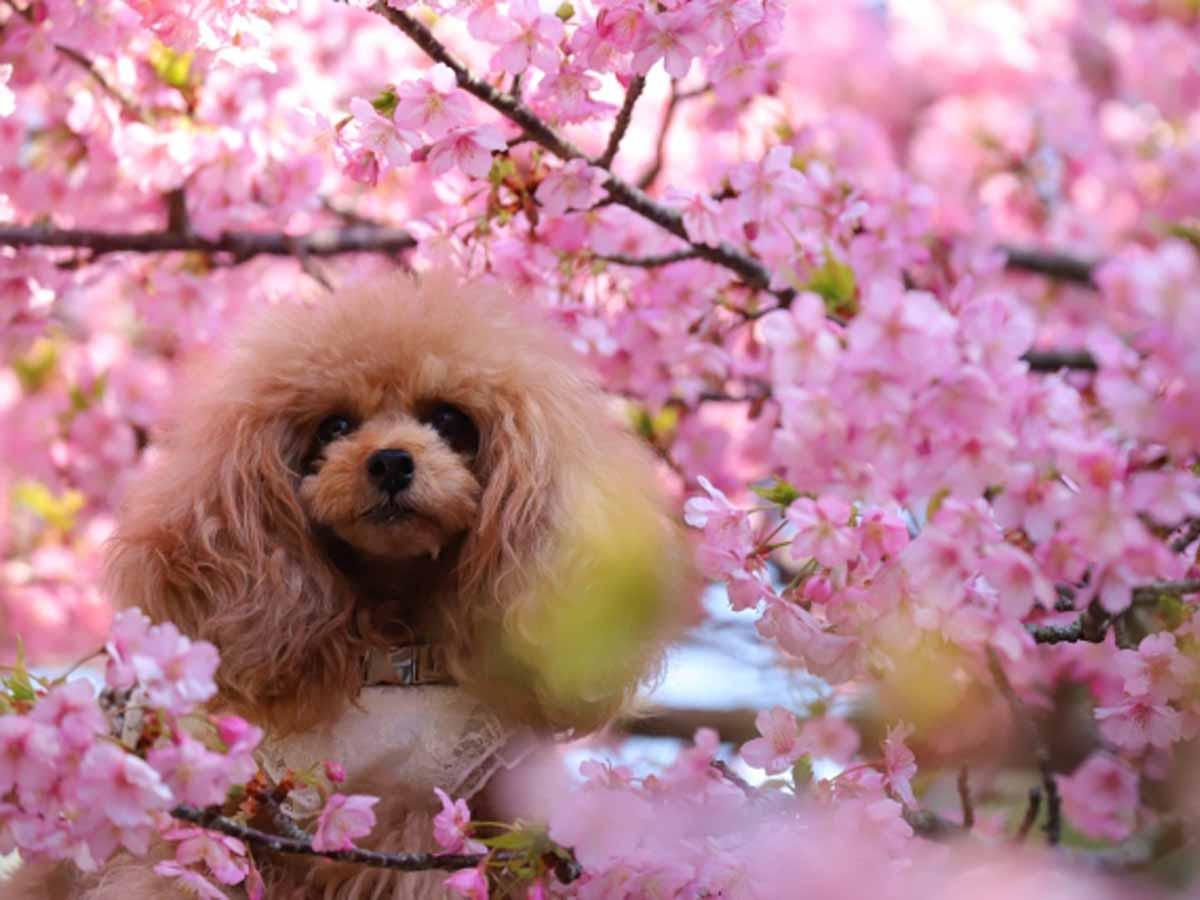 春のお散歩バッグプレゼントキャンペーンイメージ画像