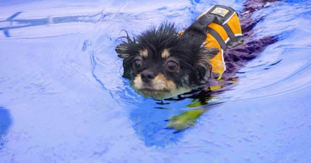 盲目犬の補助具・ドッグバンパーの文月(ふづき)BLITZフキンプレゼントキャンペーンイメージ画像