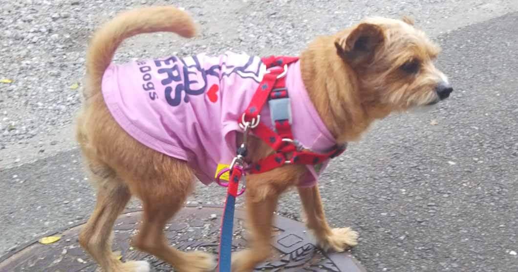 盲目犬の補助グッズ・ドッグバンパーのリードコントロール方法イメージ画像