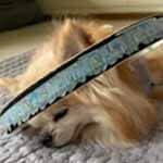 盲目犬の補助具、毎日愛用していたらボロボロに…スペアのご注文アイキャッチ画像