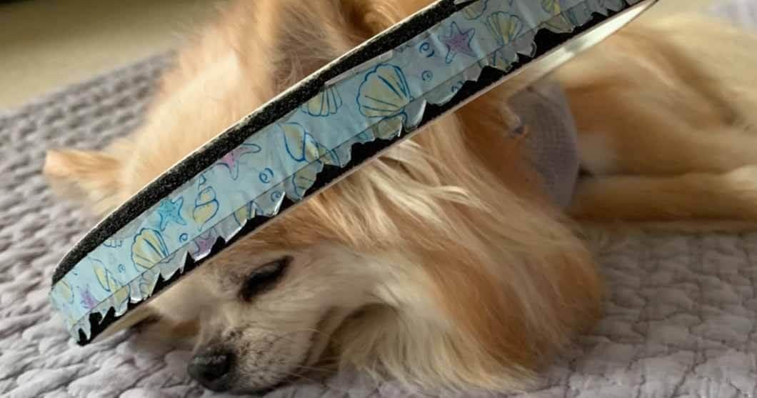 盲目犬の補助具、毎日愛用してたらボロボロに…スペアご注文イメージ画像