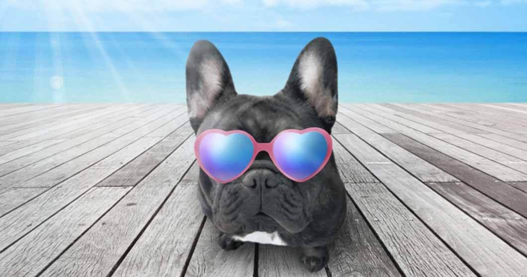 盲目犬の補助グッズドッグバンパーご予約、ご注文はお早めに!2021年の夏季休業のお知らせイメージ画像